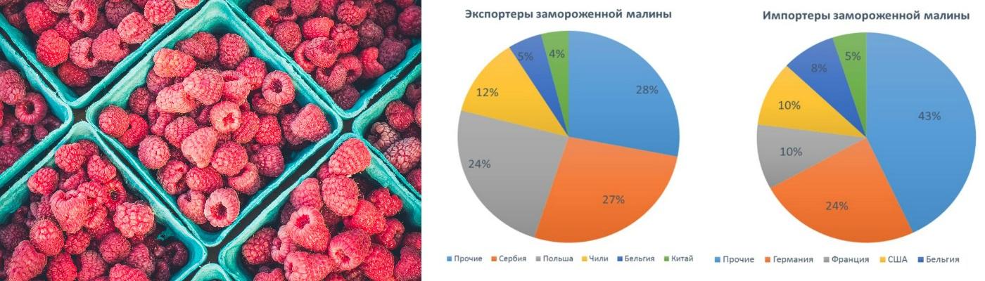 Аудит рынка замороженных ягод
